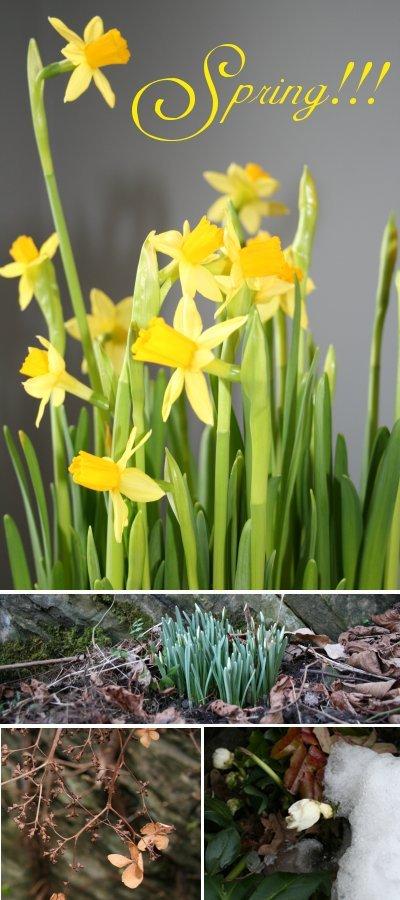 Spring_me
